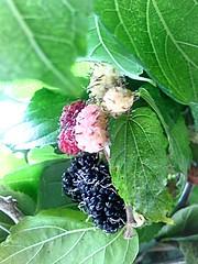 AMORA (neria.rodrigues) Tags: natureza frutas