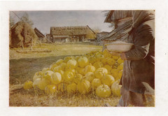 Woman with seeds. (prima457) Tags: village female pumpkin seeds harvest economy yard house job oilprint