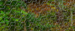 FlickrFriday: BeautifulGeometry (Hayseed52) Tags: flickrfriday beautifulgeometry geometry fall colors chickenwire double virginia