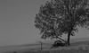 _MG_2441 (adrian primero) Tags: toscana blanco y negro gran angular canon 100d tamron 18270 carro rueda tranquilidad inspiracion zhen italy italia