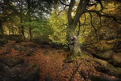 Autumn Colours (unciepaul) Tags: padley gorge peak district england uk autumn colours tree leaves rocks gate wall october