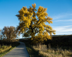 289/365 2017 - EXPLORED!  Thank you so much!!! (d2roberts) Tags: 365the2017edition 3652017 day289365 16oct17 fall cachelapoudretrail windsor colorado