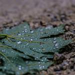leaf the mud thumbnail