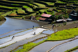 men at work, Batad  Philippines _6819