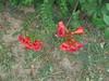 166 (en-ri) Tags: fiorellini little flowers sony sonysti arancione verde erba grass aiuola