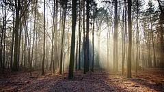 *** (pszcz9) Tags: polska poland przyroda nature natura las forest forestimages mgła fog mist drzewo tree promień ray pejzaż landscape wschódsłońca sunrise poranek morning beautifulearth sony a77