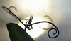 tendrils (conall..) Tags: lathyrus spiril spiral macromaondays sweetpea everlasting backlit backlight leaf tendril raynox