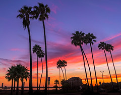 Newport Beach Sunset (meeyak) Tags: newportbeach newport beach coronadelmar sunset silhouette trees palmtrees colors clouds night dark moody people oc orangecounty california usa westcoast meeyak sony a7r2 28mm sonyalpha travel adventure vacation outdoors