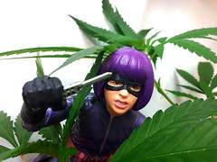 Hit-Girl Clones (professional recreationalist) Tags: brucedean professionalrecreationalist victoriabc hitgirl hit girl kick ass kickass doll actionfigure marijuana cannabis medical knife clone clones mask