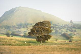 Chrome hill backdrop
