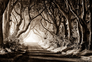 Moody Morning at the Dark Hedges