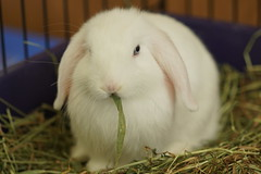 Rabbit Fest 2017 (Tjflex2) Tags: rabbit fest 2017 rabbitfest rabbits bunnies bunny lapin lagomorph lagomorpha conejo cute furry