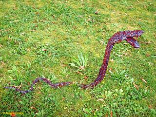 Schlange im Gras!