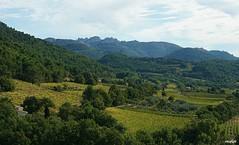 Séguret, terre de vignobles (Missfujii) Tags: vignoble