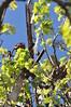 8-foot IBC Geared Simplex windmill (d.o.m. 1939); Murrumbateman, NSW, Australia (sarracenia.flava) Tags: intercolonialboringcompany ibc geared simplex windmill murrumbateman nsw australia