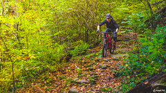 2017.10.17. Borsberg (Michael_Topp) Tags: sony dresden wald sonne licht baum fahrrad mountainbike cube magura shimano