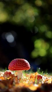 Bokeh de champignon [Explore]