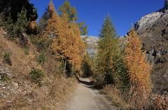 Tzeusier (bulbocode909) Tags: valais suisse tzeusier montagnes nature automne forêts arbres mélèzes chemins paysages jaune bleu vert