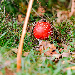 Walk To Coombe Abbey Country Park 8th October 2017 (boddle (Steve Hart)) Tags: stevestevenhartcoventryunitedkingdomcanon5d4 rugbydistrict england unitedkingdom gb walk to coombe abbey country park 8th october 2017 steve hart boddle steven bruce wyke road wyken coventry united kingdon great britain canon 5d mk4 100400mm is usm ii wild wilds wildlife life nature natural bird birds flowers flower fungii fungus insect insects spiders butterfly moth butterflies moths creepy crawley winter spring summer autumn seasons sunset weather sun sky cloud clouds panoramic fly agaric