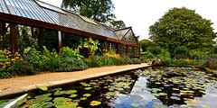 HIDCOTE GARDEN (chris .p) Tags: hidcote garden gloucestershire nikon d610 water pool pond autumn 2017 view nt september nationaltrust uk england plants flowers reflections capture