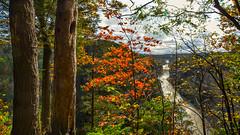 A Splash of Autumn Color (halfpintharmony) Tags: 7dwf saturdayslandscape fabulousfoliage letchworthstatepark geneseeriver middlefalls fallcolor autumn autumnleaves color outdoors nikon sigma1020mm d5200