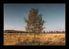 (Adam C Images) Tags: nikon d800 full frame dslr tamron 2470 vc f28 tree rural landscape grass morning fog mist blue sky kp trail south frontenac township hartington ontario canada nisi filters 4 stop soft edge graduated neutral density nd grad v5 filter holder polarizer