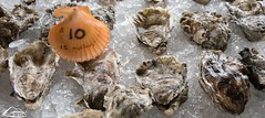 Oysters (2) (Washington State Department of Agriculture) Tags: farmersmarket shellfish wsdagov washingtonstatedepartmentofagriculture wsda