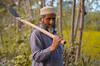 Farmer (basitkhan7) Tags: farmer pakistan peshawar charsadda nisatta outdoor naturallight nature natural nikon nikonpakistan nikond5100 nikonasia nikonportrait nikonbokeh 50mm 50mmbokeh yongnuo50mm yongnuo50mmsampleimage yellow green photography ngc tree