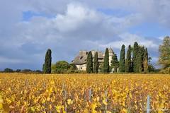 Ripaille aux couleurs d'automne (joménager) Tags: nikonafs24120f4 hautesavoie paysage chablais château thononlesbains nikond3 nikonpassion france fr vigne