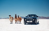 4 Llamas (Alex Penfold) Tags: rolls royce sweptail llama llamas argentina luxury car cars autos salt flats lakes alex penfold 2017