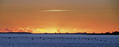 35 cranes (Simple_Sight) Tags: crane kranich bird vogel sea balticsea sunset sky sun clouds orange blue
