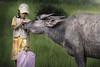 Siem Riep, Cambodia (Aicbon) Tags: verde cambodia cambodja camboya kampuchea khmer jemer niña child children kid nena niños infancia bufalo ganado bufalodeagua green arroz arrozal ricefields buffalo siemreap siemriep angkor mekong cambodge cambogia camboja jiǎnpǔzhài 柬埔寨 kamboçya kambodia 캄보디아 kamboḍiyā कम्बोडिया kambodiya kambodja kambodscha kambodsja kambodža камбоджа kambodża камбоџа kambodzsa kamboja καμπότζη kemboja կամբոդիա