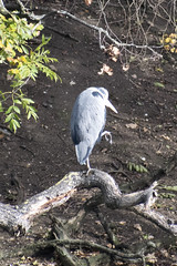 """heron • <a style=""""font-size:0.8em;"""" href=""""http://www.flickr.com/photos/157241634@N04/38018897232/"""" target=""""_blank"""">View on Flickr</a>"""