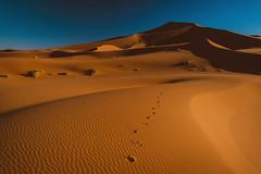 Sahara Desert (see1st) Tags: morocco africa sahara desert cameltrip nikon nikond50 adventure travel dunes sand