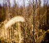 Frond Memories (Mitymous) Tags: fall2017 gray seedpods walk wisconsin
