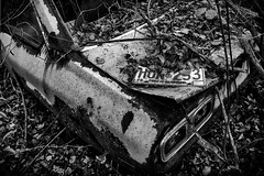 Old Plate (Dan Fleury) Tags: cars photography junkyark wrecks licence plate ontario canada old car junkyard cans2s canon wide trees rusty rust steel