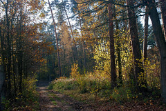 DSC_1856 (FMAG) Tags: 2017 żabieniec zalesie jesien