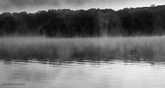 Lochness on Lakewood (Skyelyte) Tags: forest trees woods lake water sky mist geese canadiangeese lochness lakewood lakewoodwaterburyconnecticut reservoir island fog foggy misty clouds cloudy blackandwhite monochrome wood