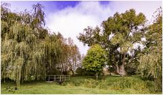 calm and serenity (touflou) Tags: arbres trees nature eden paradis automne sérénité calme paisible
