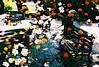 (Dai Kuwamoto) Tags: colornegativefilm colornegative negativefilm crossprocessing multipleexposure flower flowers amusementpark bench benches film analog