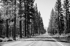 2017 Pac NW Lassen Volcanic-47 (Michael L Coyer) Tags: parks nationalparks usnationalparks unitedstatesnationalparks lassenvolcanicnationalpark lassen lassenvolcanic lassenvolcanicnatlpark mountain mount wilderness forest volcano erruption lava magma snowcap summit us101 highway hwy 101 highway101 hwy101 blackandwhite blackwhite coniferous evergreen fir cedar