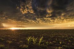 Mammatus sunset, Kansas. (John Finney) Tags: mammatus kansas clouds crops strom stormchasing usa weather extremeweather backlit