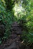 DSC03318 (tammyloh) Tags: 2017 kalalautrail napalicoast kauai hawaii hiking babymoon tamron travel 28weekspregnant