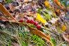 The may-lily (Pavel Kovalev) Tags: autumn fall september 2015 russia forest closeup colors beauty россия осень сентябрь красота ландыш трава лес макро