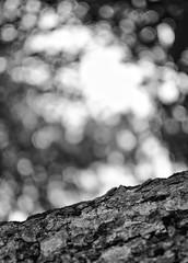Be the rain (Mister Blur) Tags: tree bokeh light rain blurred background blur depthoffield blackandwhite bw blancoynegro hacienda ochil yucatán méxico snapseed happy monochrome thursday hbmt nikon d7100 f18