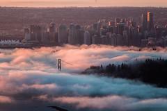 Up Before the Dawn ☁🌞 Vancouver, BC (Michael Thornquist) Tags: fogcouver lionsgatebridge stanleypark fog vancouver myportcity 604now photos604 explorebc explorecanada canoncanada ilovebc britishcolumbia pacificnorthwest pnw canada 500px