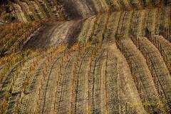 Capolavori dei contadini (Gianni Armano) Tags: vigneti capolavori dei contadini foto gianni armano photo monferrato alessandria piemonte italia ottobre 2017 flickr