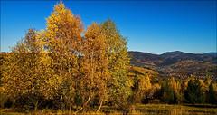 Rajcza (witoldp) Tags: beskid beskidy żywiecki rajcza kotlina jesień autumn pilsko rysianka lipowska poland landscape karpathians