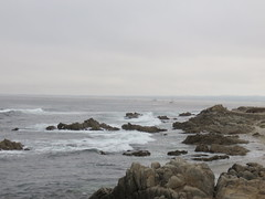20160817 Californie Pacific Grove - (101) (anhndee) Tags: usa californie california pacificgrove