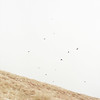 Birds (kartuphoto) Tags: mountain mountains hike hasselblad hasselblad500cm ektar birds desaturate fine art